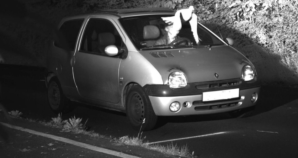 Paloma libra a conductor de una multa
